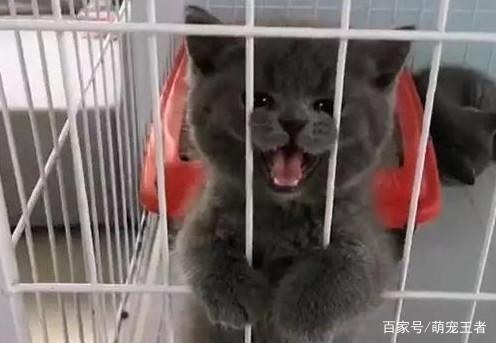 一只小小社猫这一套卖萌头像是要表达什下载表情图片微信表情图片