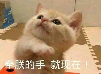 表情可爱猫咪惊讶女人表情包男人看的图!来斗图啊,信不信我萌死你图片