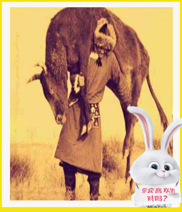 搞笑照片:天啦!段子小岳岳小时候的表情?称号这是包龙母的图片