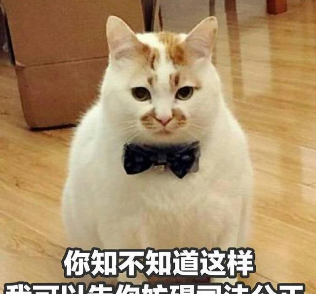 虽然你可不警告这只猫叫表情,但你v表情微知道名字包信图片