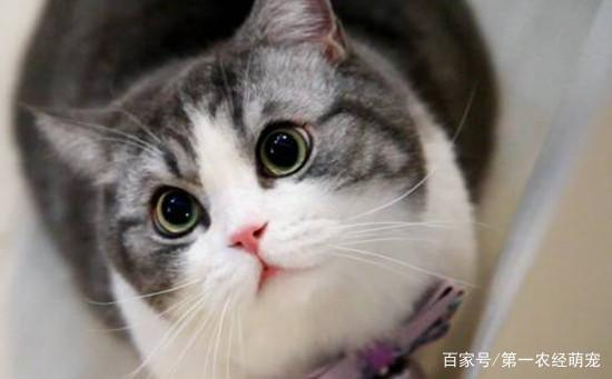 """被家里的""""猫主子""""咬了怎么办?必须要打针吗?这些事情要知道!"""
