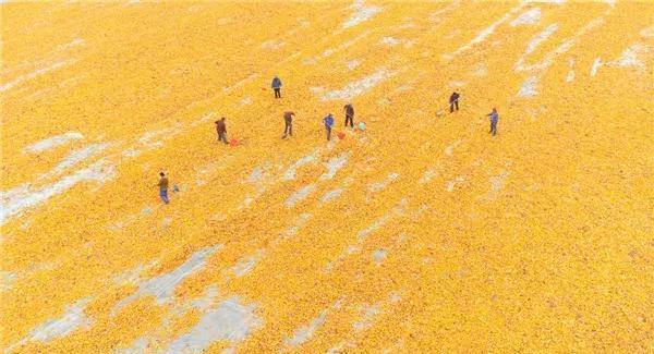 农村秋季流行色来了!你晒过几种?