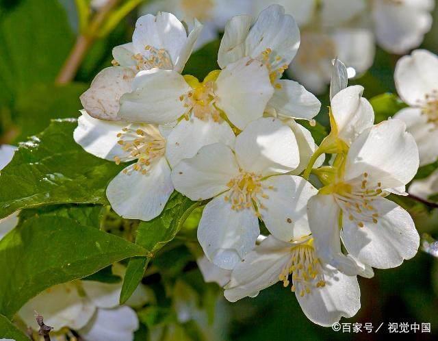 送花人网站 送鲜花一般从哪个网站