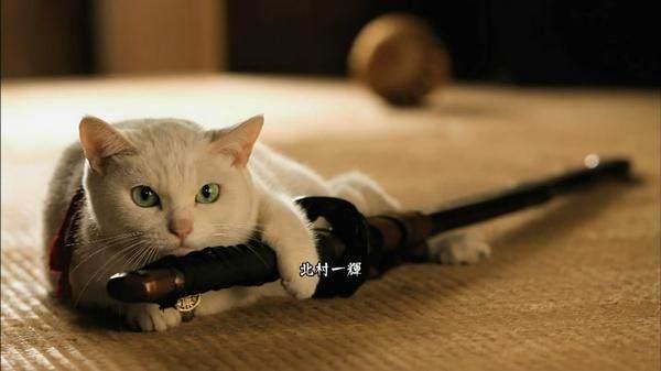 「猫武士第一季」猫侍