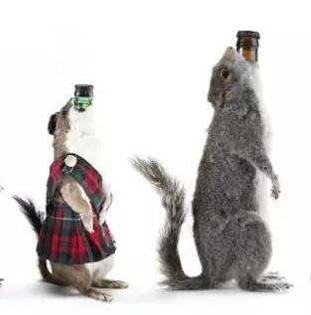 用动物标本剥皮做成的酒瓶