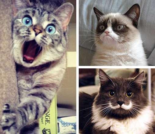 「上校夫人」猫上校